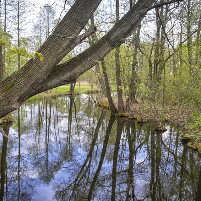 """Spreewald, Beautiful Landscape in Germany"" stock image"