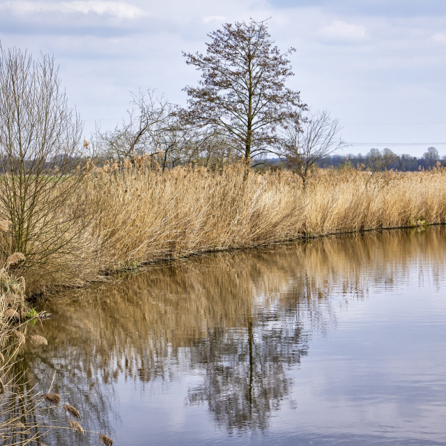 """""""Landscape with a lake in early springtime"""" stock image"""
