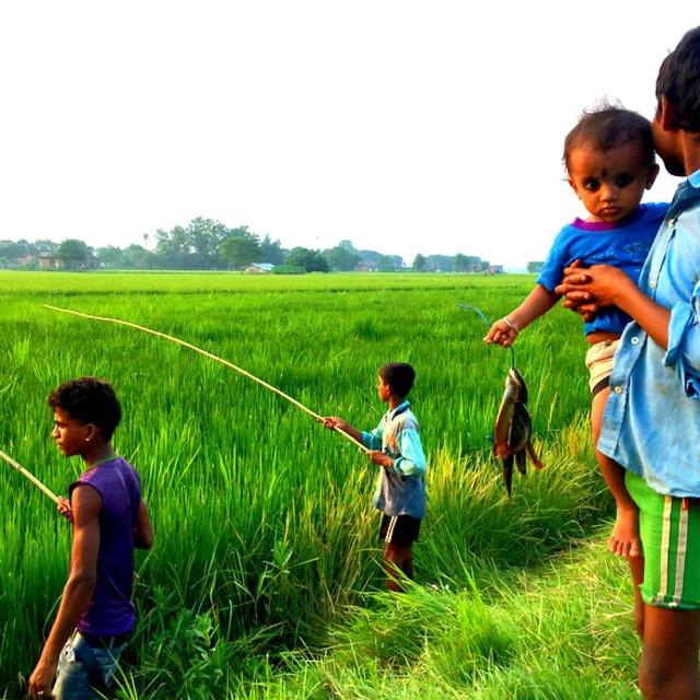 """""""Paddy Field Fishing with a Bamboo Stick, Terai Nepal"""" stock image"""