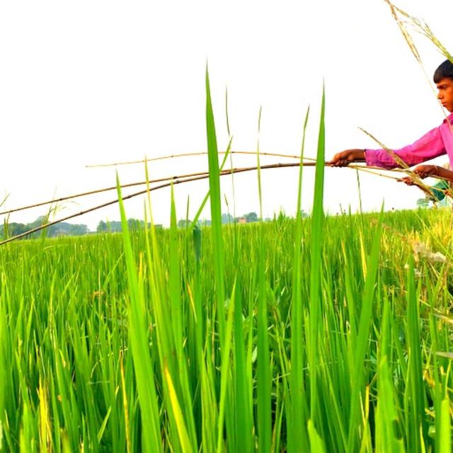 """""""Fishing Rod in Terai, Nepal"""" stock image"""