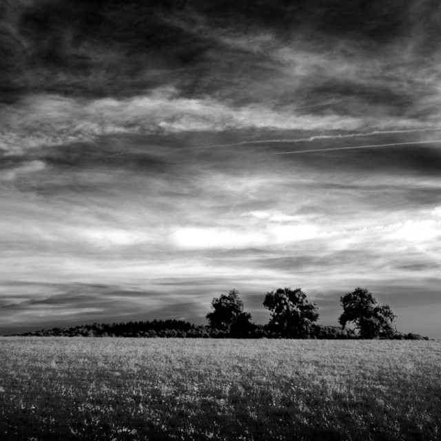 """Three Trees in Field Black and White"" stock image"