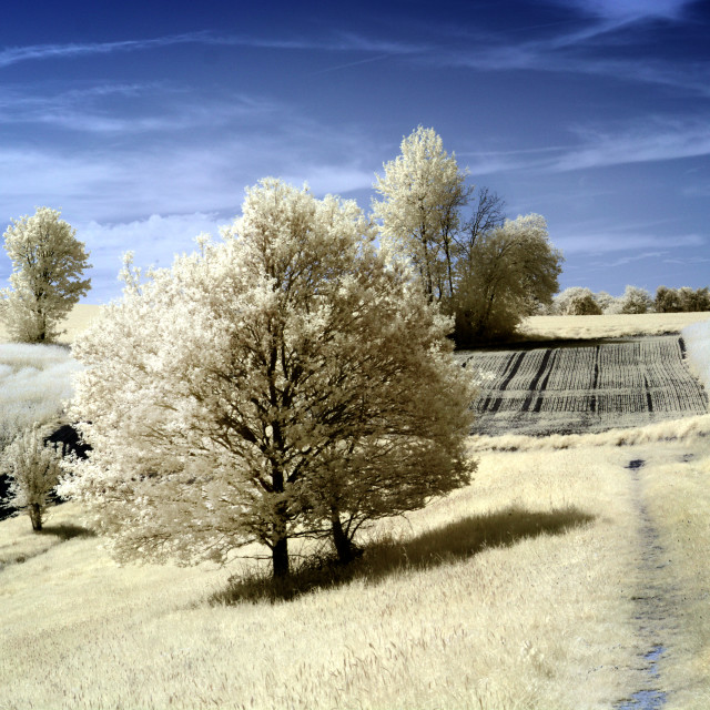 """Infrared Farm field."" stock image"