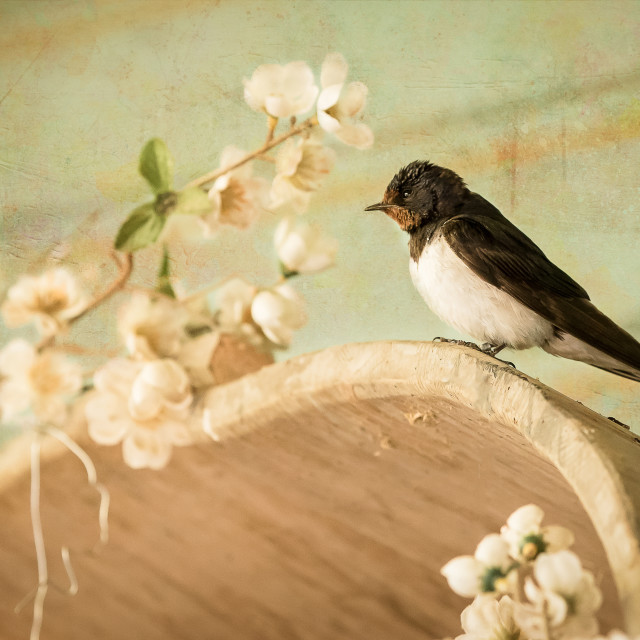 """""""Wild bird, swallow perched"""" stock image"""