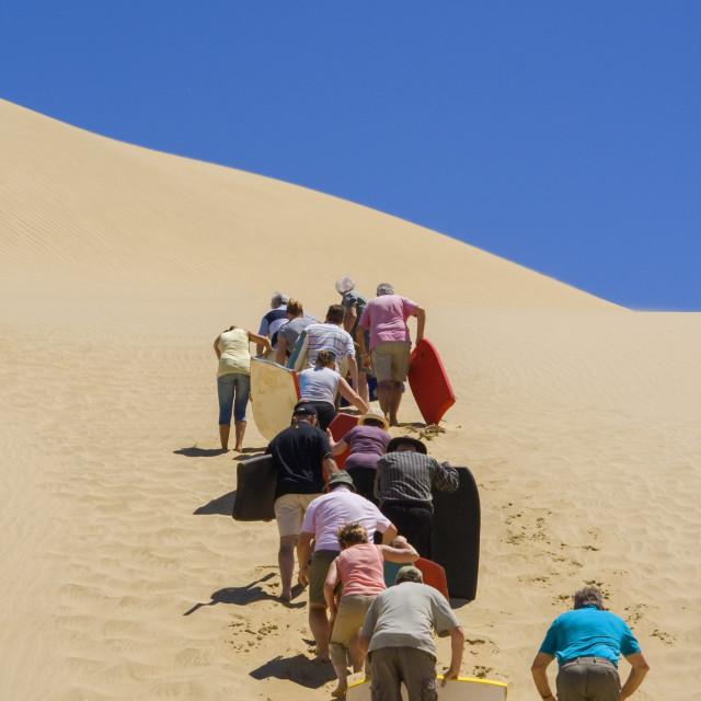 """People pushing sandboards up the dune"" stock image"