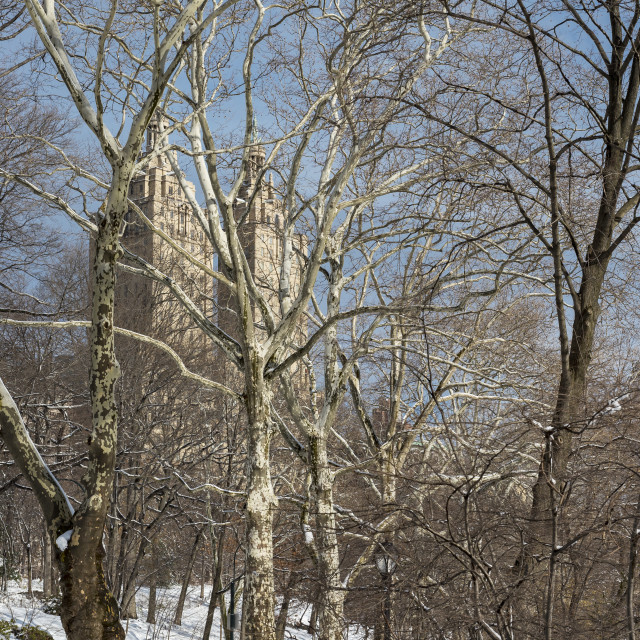 """""""Central Park in Winter"""" stock image"""