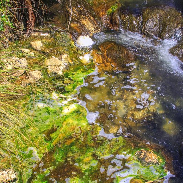 """Green algae in Rotorua"" stock image"