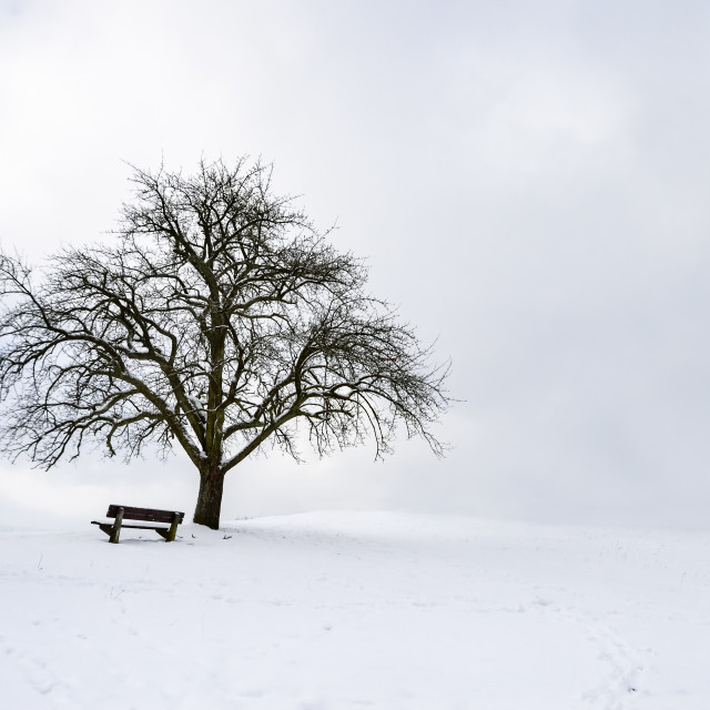 """""""Big leafless tree on a snowy hilltop"""" stock image"""