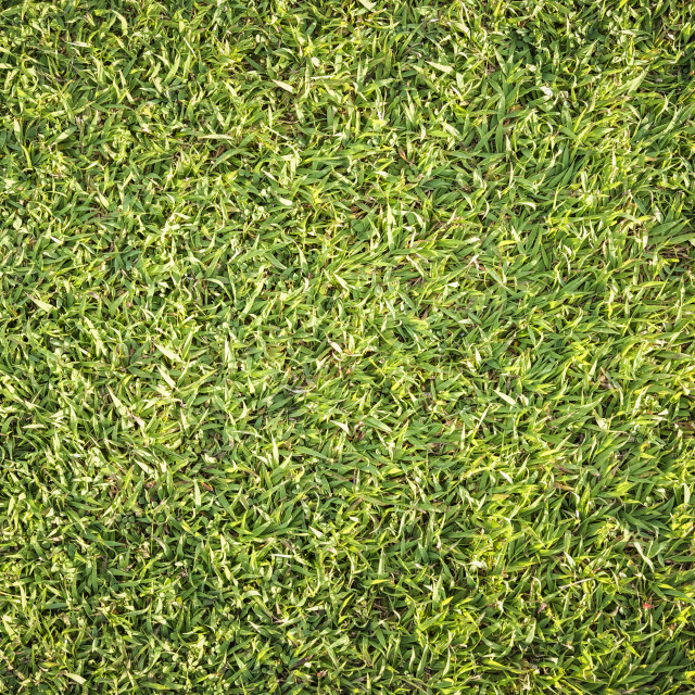 """Green Grass Background"" stock image"