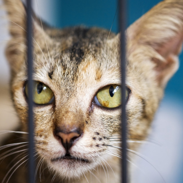 """Brown Cat Behind Cage"" stock image"