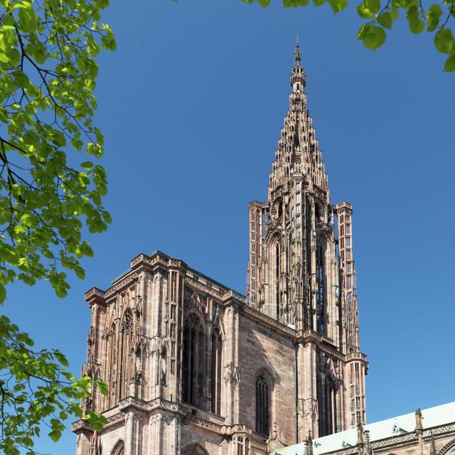 """Strasbourg Cathedral Notre Dame, UNESCO World Heritage Site, Strasbourg,..."" stock image"