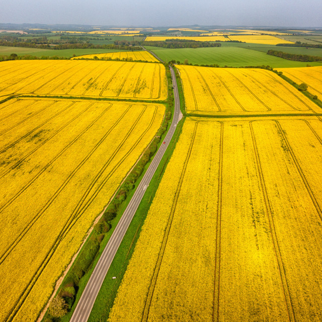 """golden fields of Oilseed Rape on the A354 at Blandford Forum in Dorset. 8th May 2018 Photograph By Chris Gorman"" stock image"