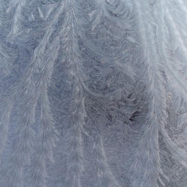 """Ice Ferns"" stock image"