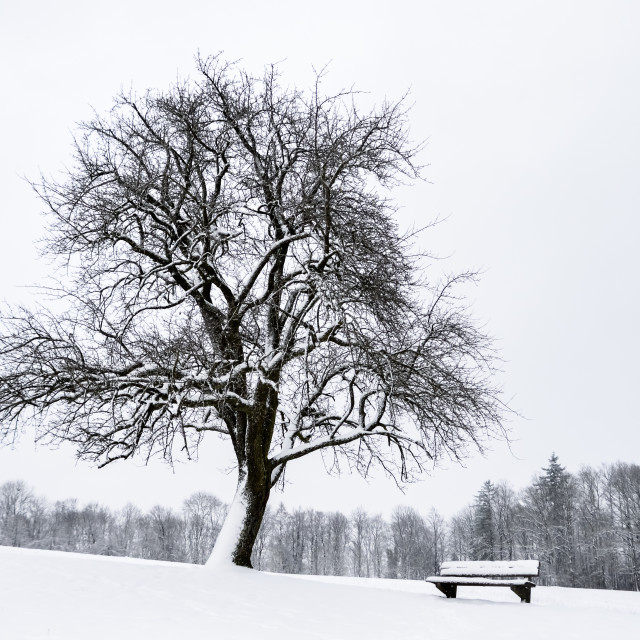 """""""Leafless tree and a bench covered in snow"""" stock image"""
