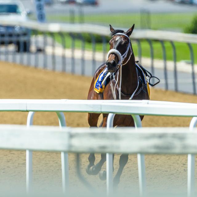 """""""Race Horse No Jockey Track"""" stock image"""