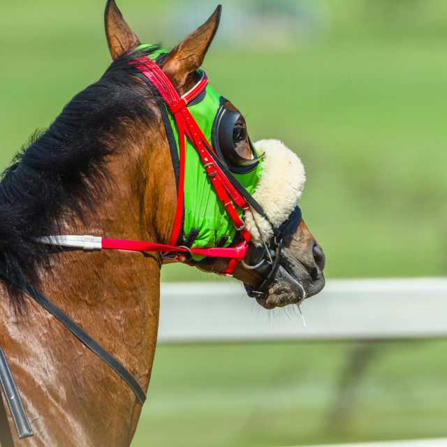 """""""Race Horse Head Track Close Up"""" stock image"""