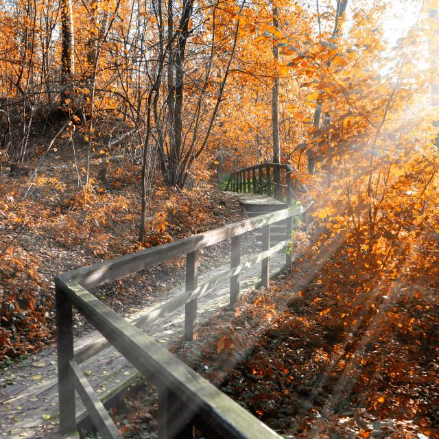 """Autumn park"" stock image"