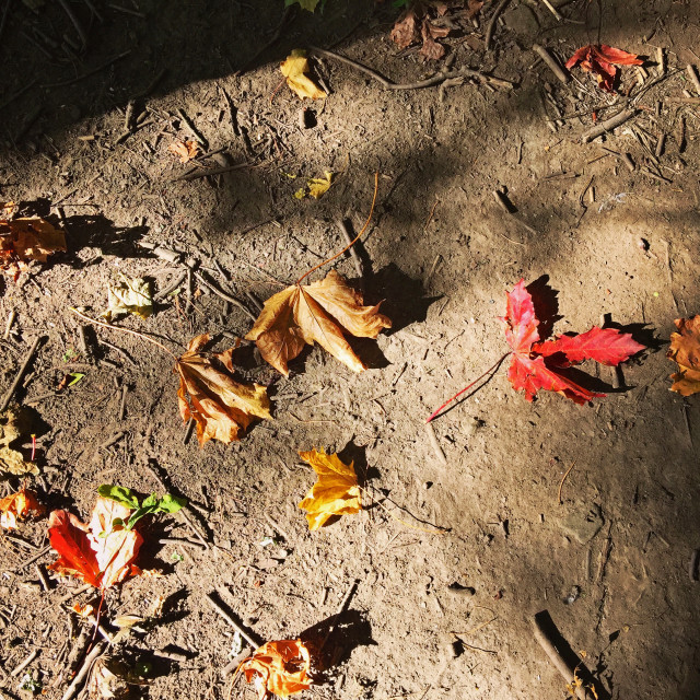 """red and brown fallen leaves"" stock image"