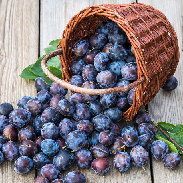 """""""Plum harvest. Plums in a wicker basket on wooden background. Har"""" stock image"""