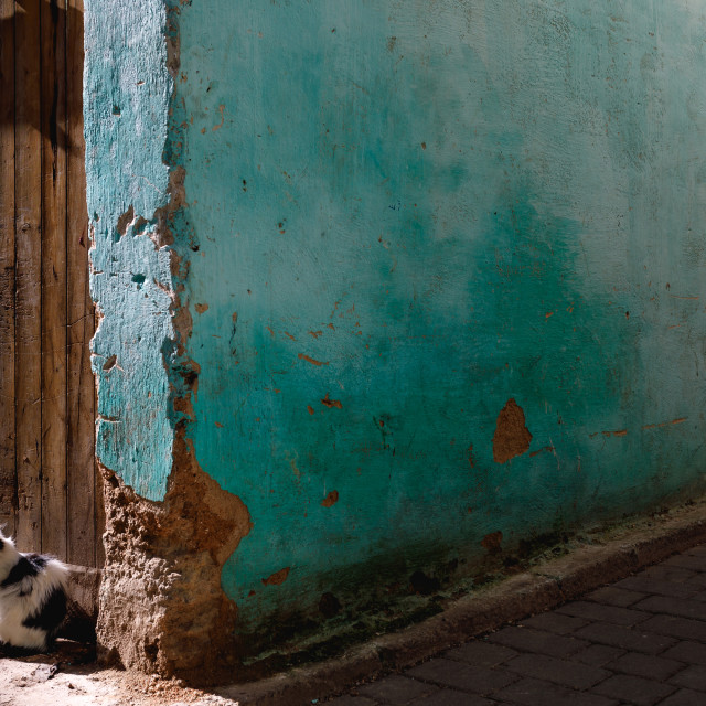 """""""Cats of Fes, Morocco"""" stock image"""