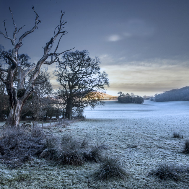 """""""Frost Trees"""" stock image"""