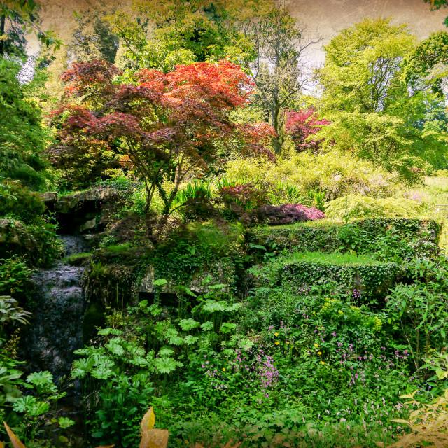 """""""Batsford Arboretum"""" stock image"""