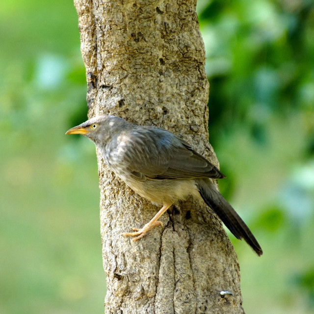 """Bird on a Tree"" stock image"