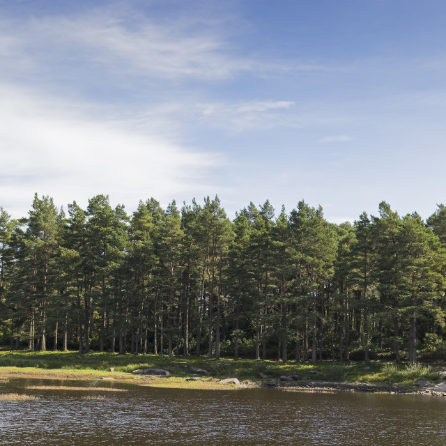 """""""Northumberland landscape with lake and trees"""" stock image"""