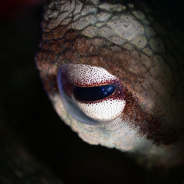 """""""octopus eye"""" stock image"""