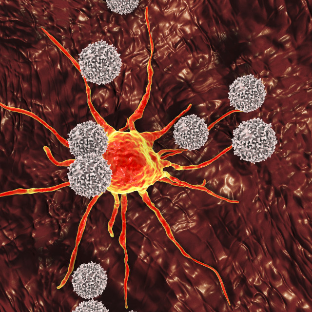"""T-lymphocytes attacking cancer cell, illustration"" stock image"