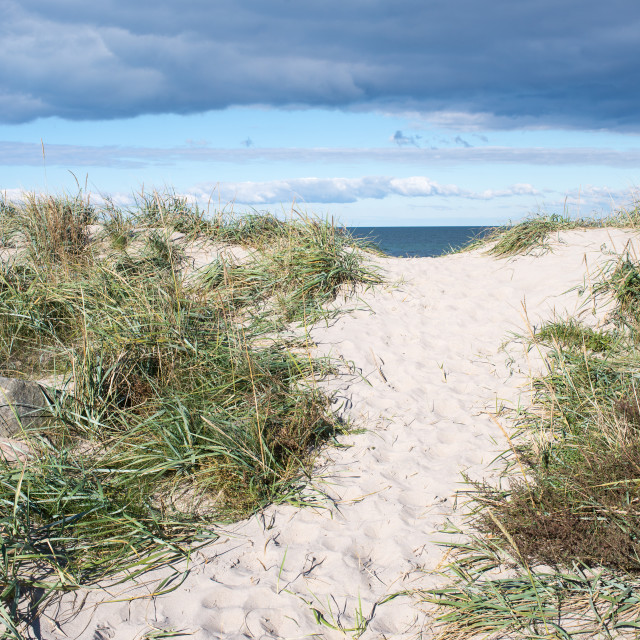 """Path to beach in Denmark"" stock image"