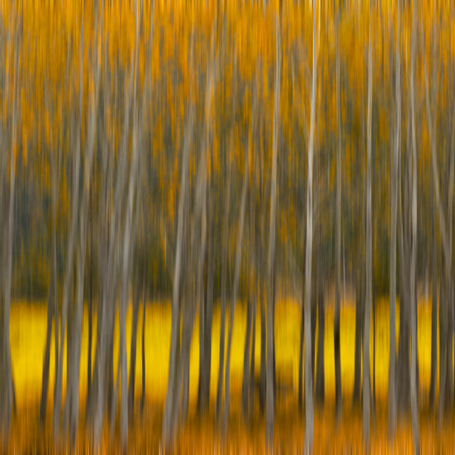 """""""Fall Color Abstract"""" stock image"""