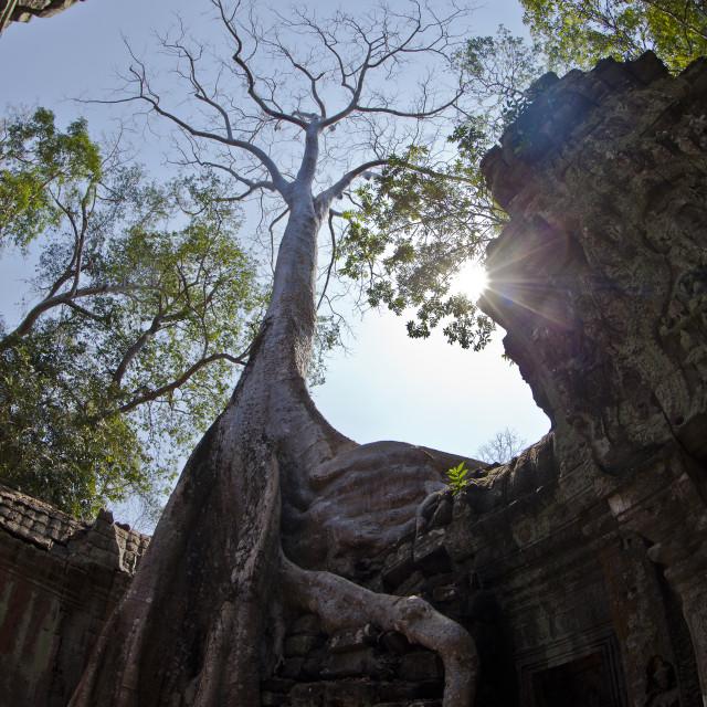 """Tomb Raider Tree"" stock image"