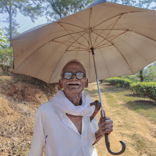 """old man Sheltered under an umbrella"" stock image"