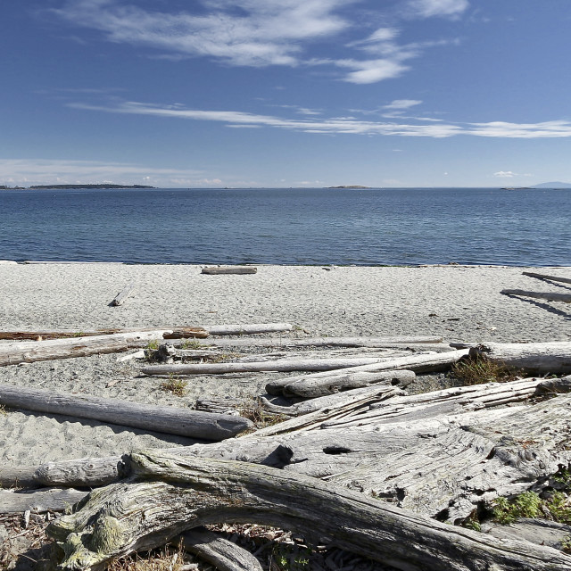 """Driftwood on beach"" stock image"
