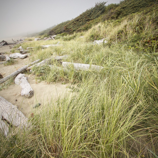 """Beach grass and and driftwood"" stock image"