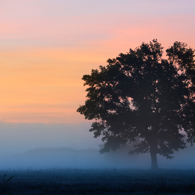 """Old oak at sunrise away from the city"" stock image"