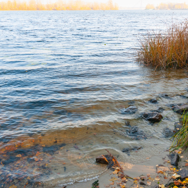 """""""Autumn leaves on the shore of the Dnieper river"""" stock image"""