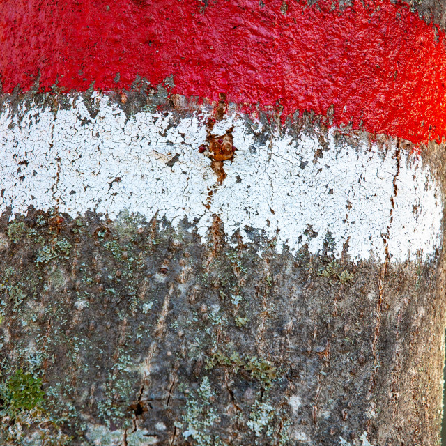 """""""Red and white sign on a tree trunk"""" stock image"""