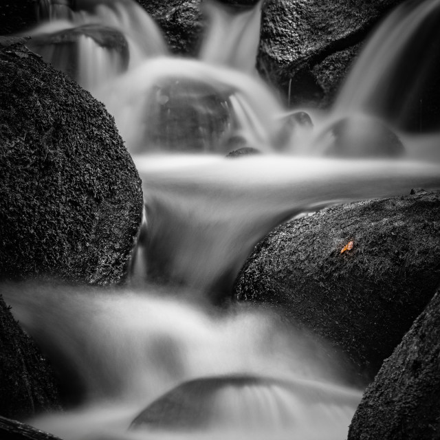 """Lone Leaf by a Waterfall"" stock image"