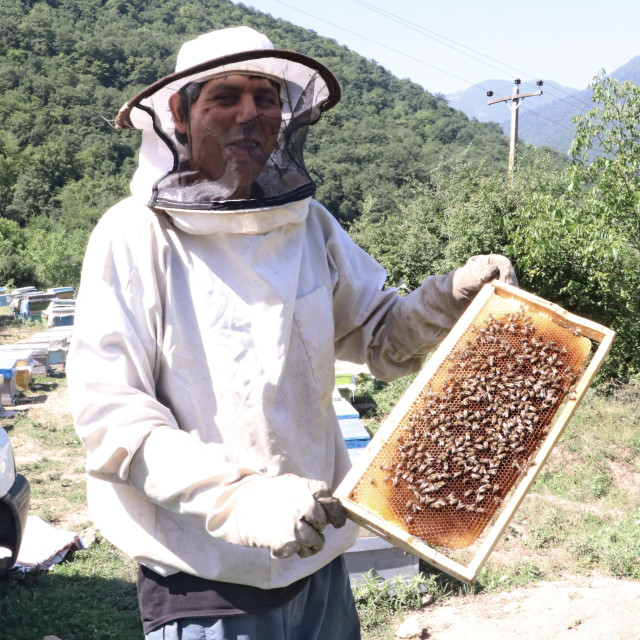 """Beekeeper shows the honeycomb"" stock image"