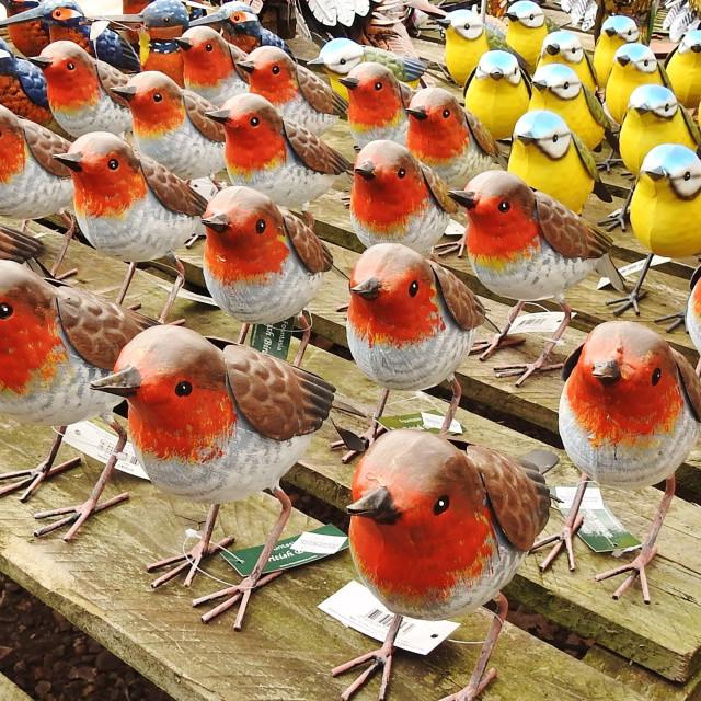 """""""Flock Together."""" stock image"""