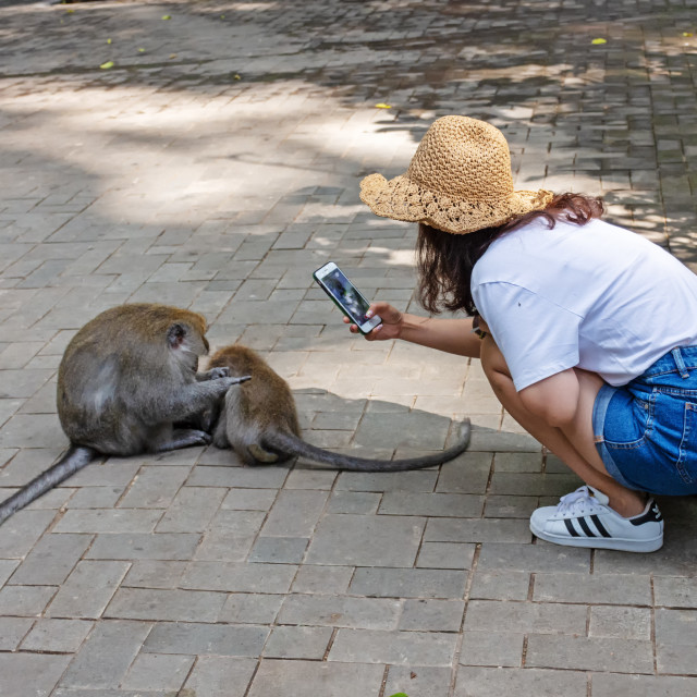 """Unidentified tourist taking photo of long-tailed macaque"" stock image"