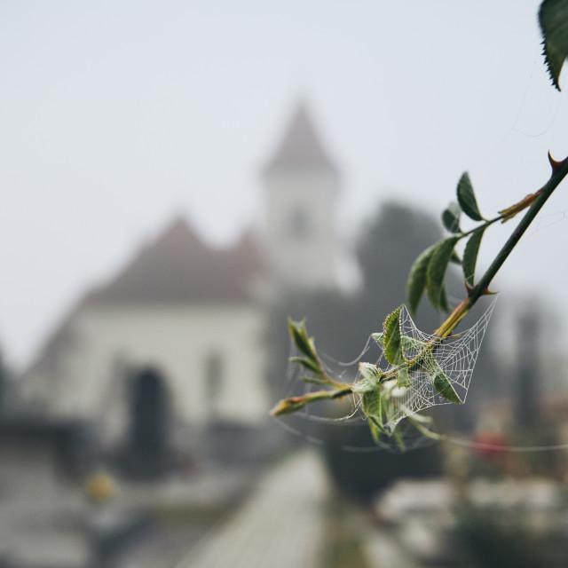 """Cemetery in autumn fog"" stock image"