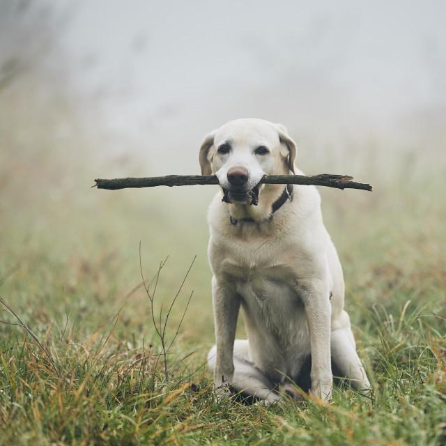 """Dog in autumn fog"" stock image"