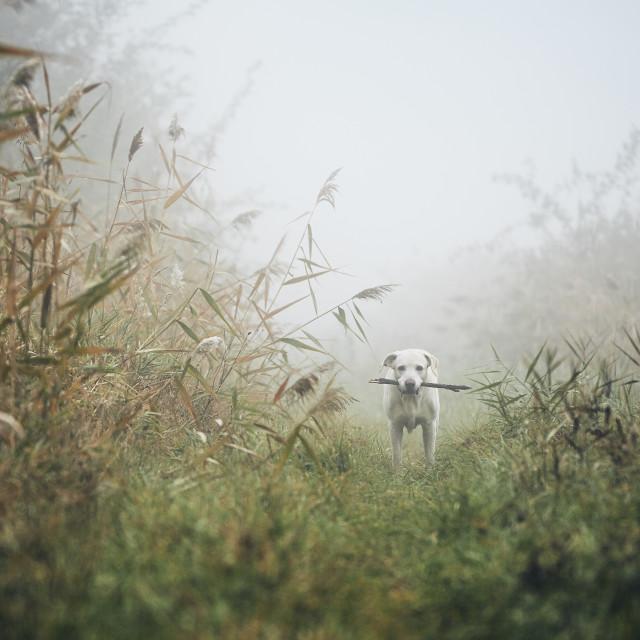 """Sad dog in autumn fog"" stock image"