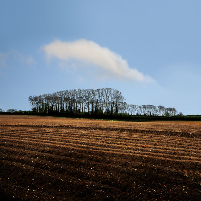 """""""Ploughed field"""" stock image"""