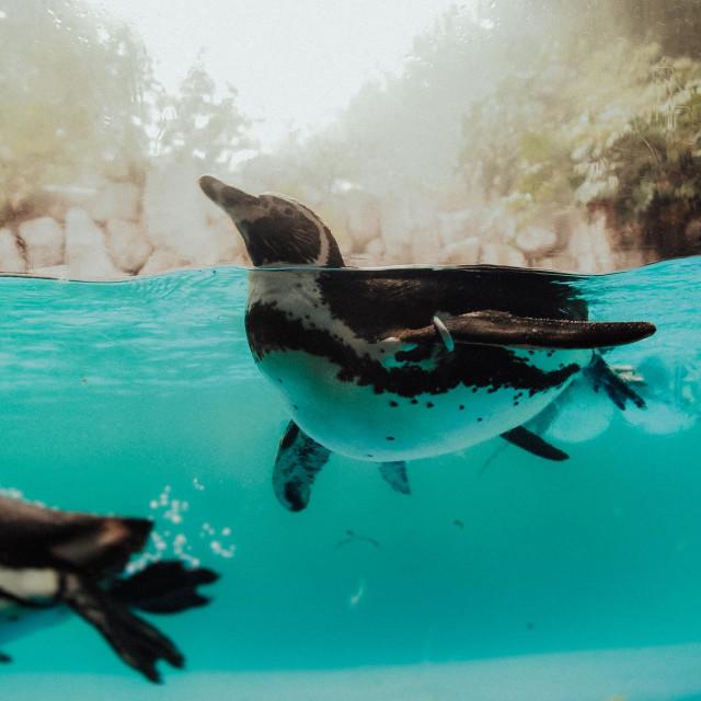 """Pinguin"" stock image"