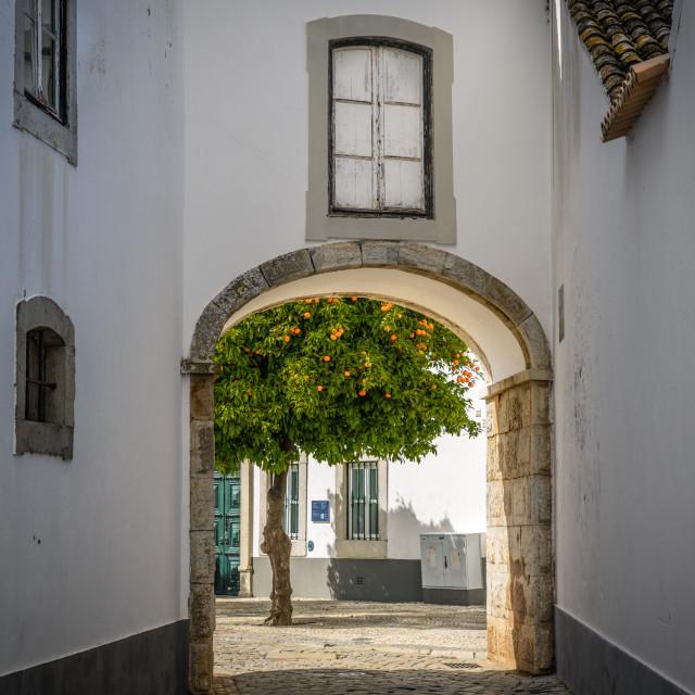 """Orange tree in Old Town Faro Portugal"" stock image"