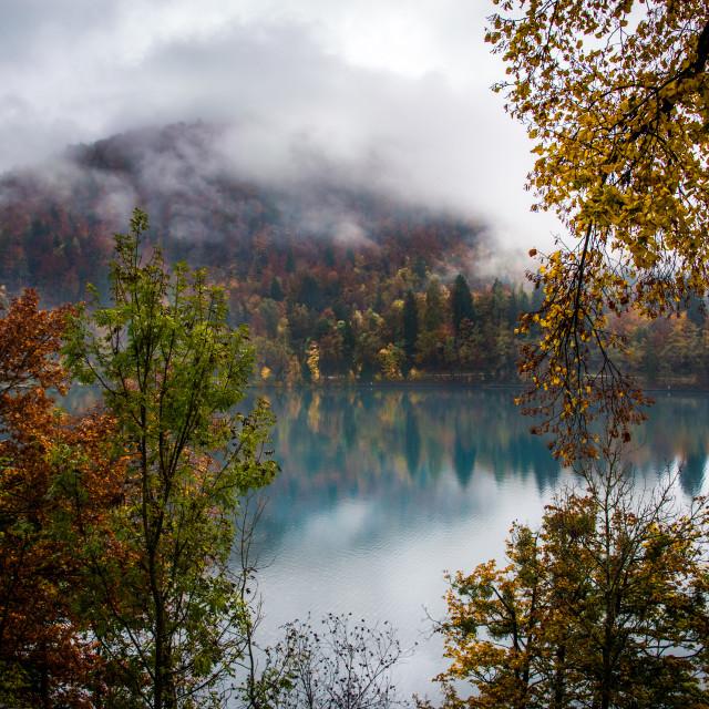 """""""Autumn foliage on Lake Bled"""" stock image"""