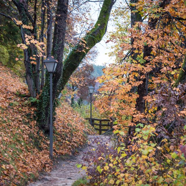 """Fall foliage on a path"" stock image"